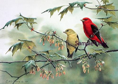 spring-tanagers.jpg