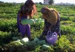 زنان کشاورز بی مزد